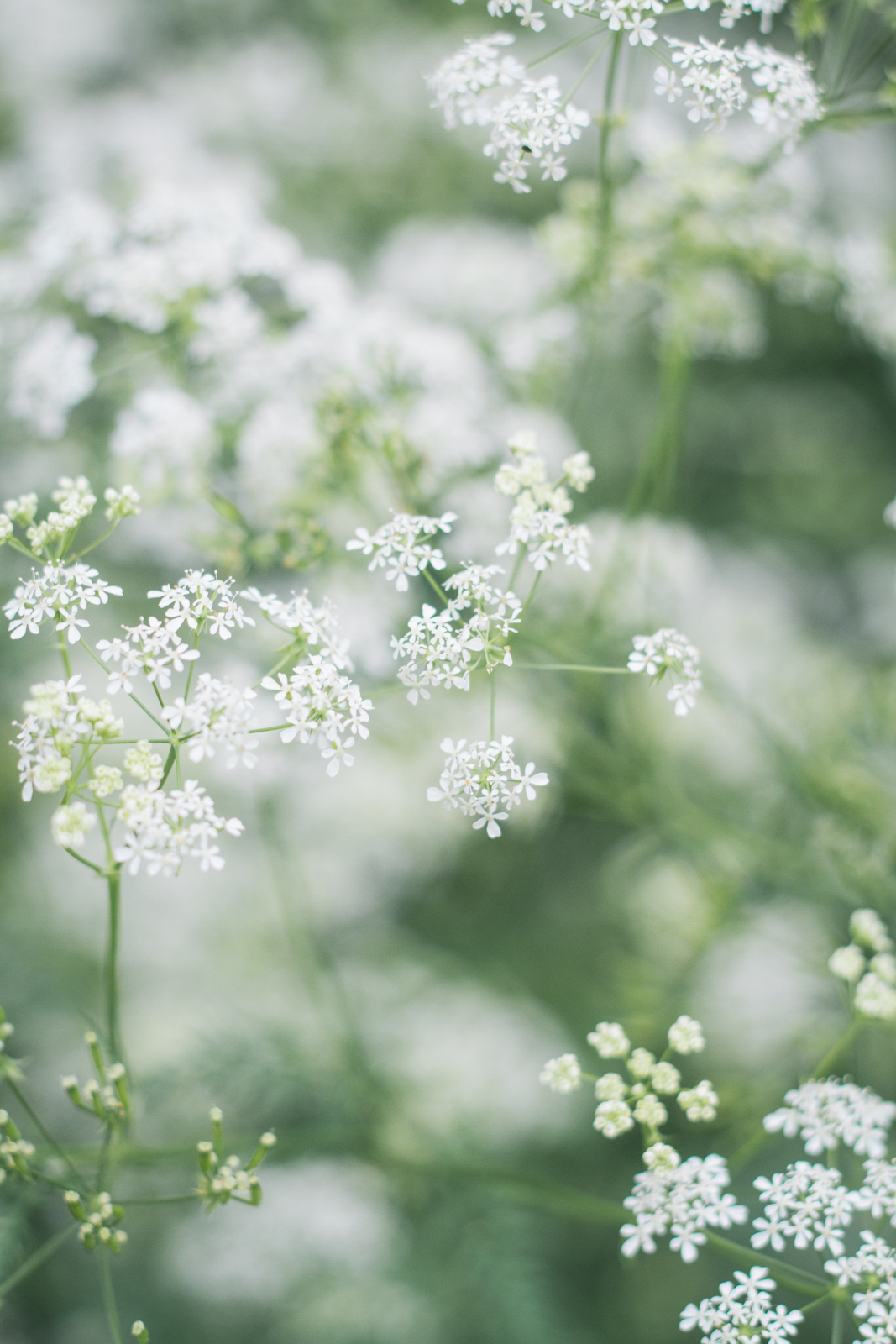 Fille en Fleurs